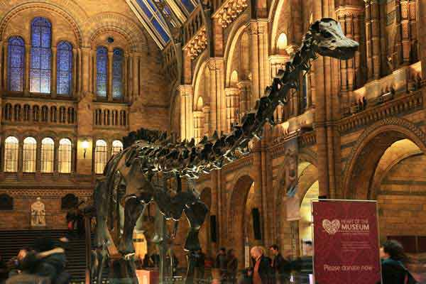 Natural History Musem one of things to do in london
