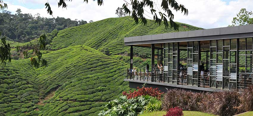 Malaysia Road Trip Guide Cameron Highlands Directasia