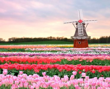 Love Seeing Fields of Flowers? Here are 7 Countries you Shouldn't Miss