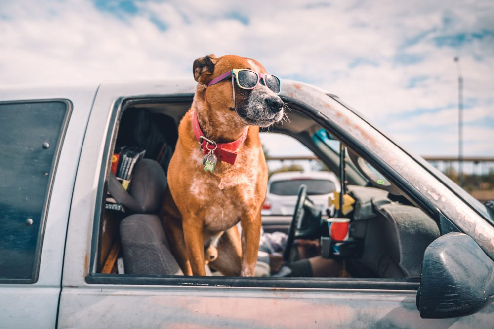 Preparing your Car to be Pet-Friendly
